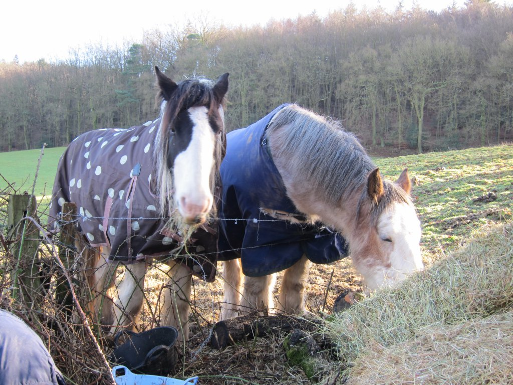 Chantries Horses Happily munching away at the hay