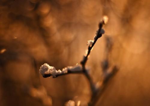 Twig ...