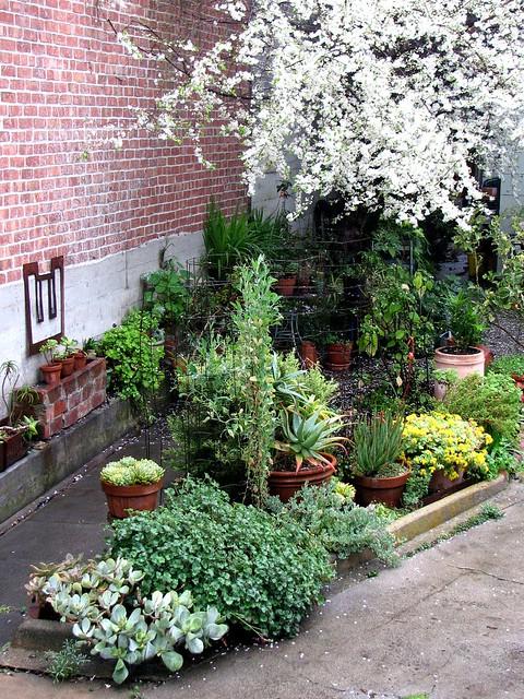 The February garden