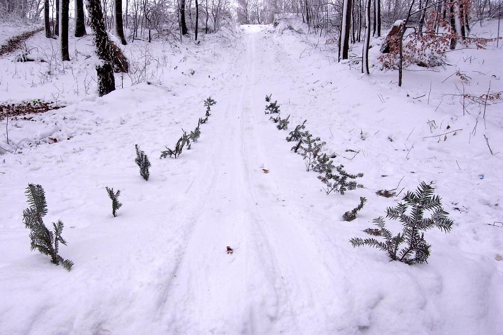 Skocznia / Ski jumping hill