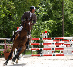 Horse   (3)