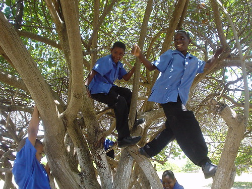 Boys in trees!