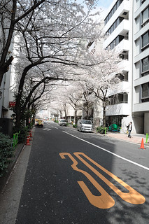 Japan2010_Sakura_080 | by andre64