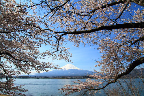 Sakura on Mt. Fuji | by skyseeker