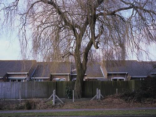 Suburban Trees