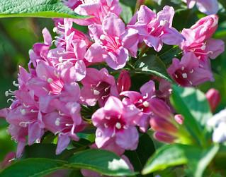 Flowers A Plenty | by Property#1