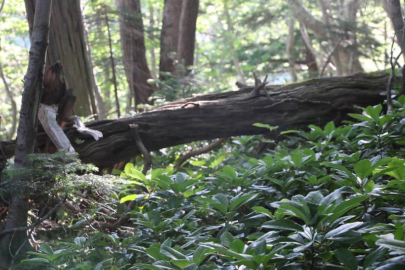 2014-07-21_01579_北海道登山旅行.jpg