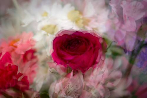 Valentine's Flowers (Daughter) | by SopheNic (DavidSenaPhoto)