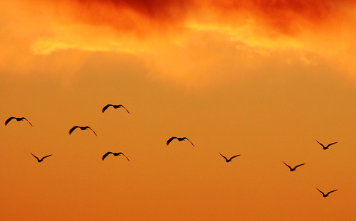 pakistan sunset nature birds evening islamabad