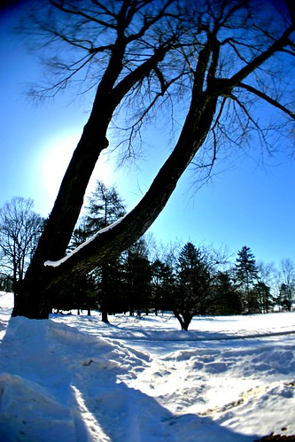 city blue schnee trees winter sunset sky urban usa white snow streets cold ice field lines architecture century sunrise dawn see twilight shoes warm frost shadows seasons power angle stuck dusk michigan wide azure fisheye icicle kalamazoo lonely agriculture barren wmu hdr practicaljoke 20th baeume cycles hickory corners kbs inhospitable gulllake nachbarschaft strassen ldr westernmichiganuniversity withoutleaves vineneighborhood ortoneffect bundesstaat kelloggbiologicalstation davisstreetpark