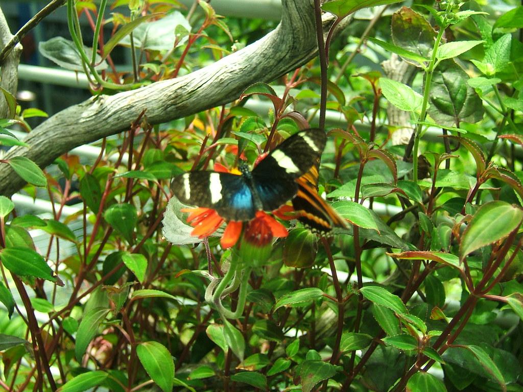 Butterfly in greenery