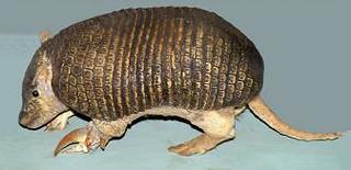 Genus Cabassous
