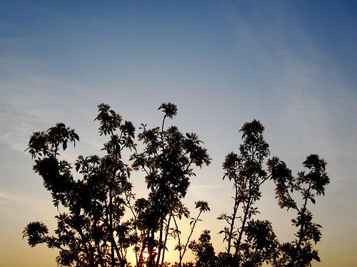 sunrise md