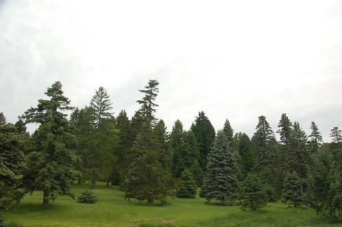 trees tree boston pine forest ma spring massachusetts harvard arnold arboretum harvarduniversity bostonma 2010 arnoldarboretum bostonist emeraldnecklace universalhub cameranikond50 exif:exposure_bias=0ev exif:exposure=0005sec1200 exif:focal_length=18mm exif:aperture=f71 treemuseum exif:flash=noflash camera:make=nikoncorporation camera:model=nikond50 centralwoods meta:exif=1274210972 flickrstats:favorites=1 exif:orientation=horizontalnormal exif:lens=18200mmf3556 exif:filename=dscjpg exif:vari_program=auto exif:shutter_count=43880 meta:exif=1350398345
