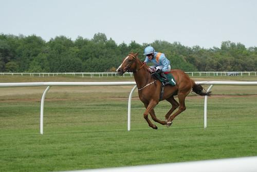 Flying horse?