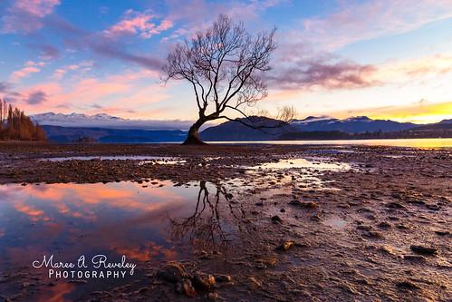 2017 canonef24105mmf3556isstm canoneos6d centralotago dawn daybreak lakewanaka mareeareveleyphotography newzealand otago southisland sunrise thatwanakatree wanaka water