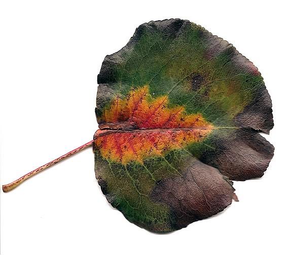 fall leaves 00