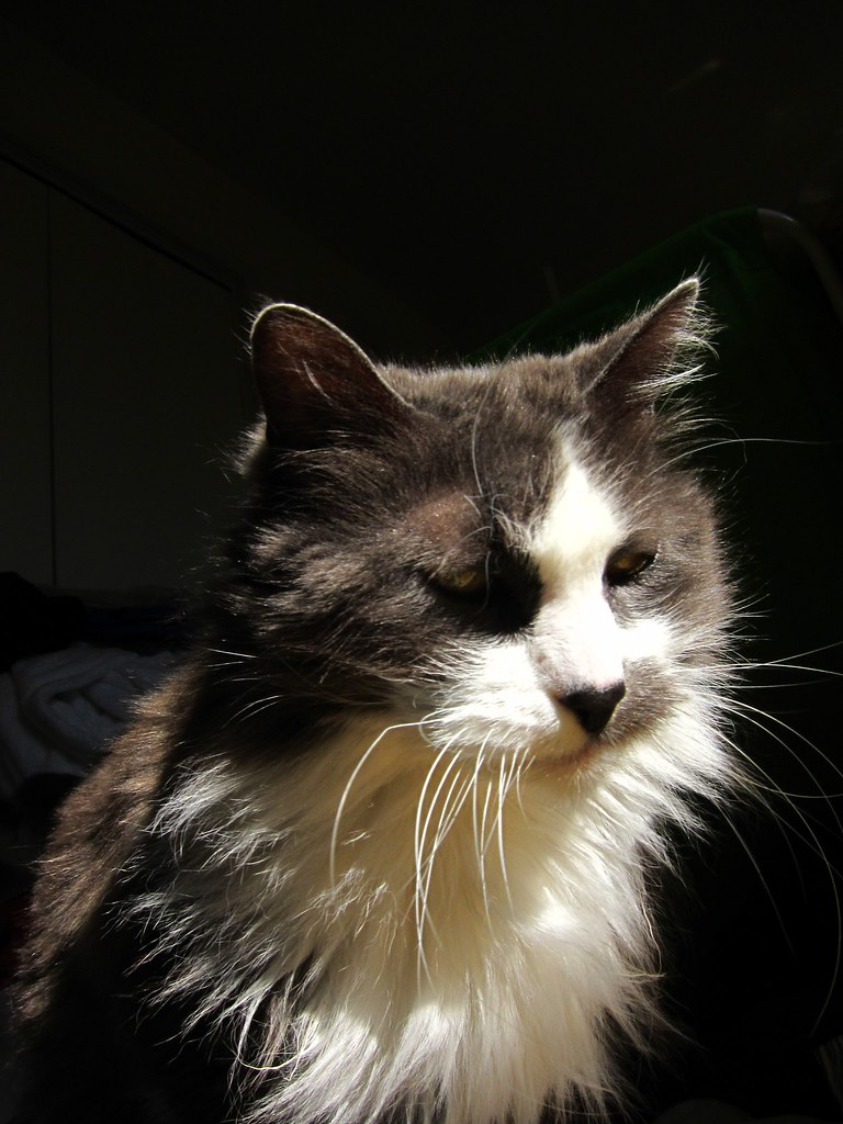 Portrait, Grumpy Old Cat