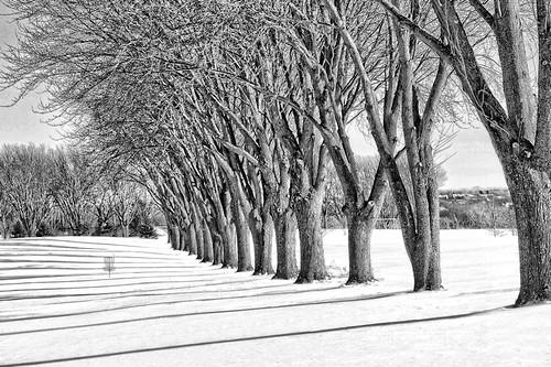 trees bw white snow minnesota shadows rochester bigblue detailed topazadjust discgolfgoal