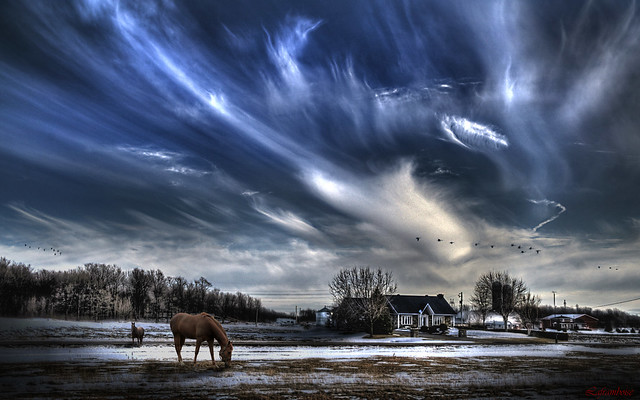 Sky- horses and geese