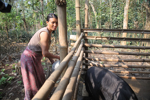 May/2010 - Farmer Khetoli prepares feed for her pigs in Nikhekhu Village, Dimapur, Nagaland, India (photo credit: ILRI/Mann).