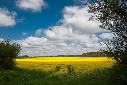 field yellow landscape geotagged rape 2485mmf3545g d700 geo:lat=52308096740625 geo:lon=109970496220428