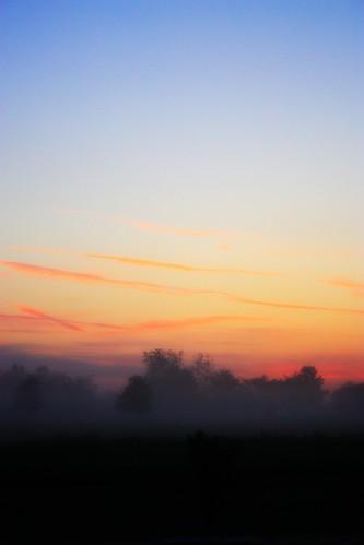 trees sky fog sunrise country foggy