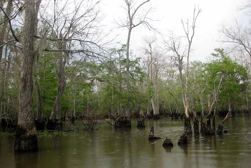 slidell louisiana swamp honeyislandswamp sttammanyparish honeyislandswamptour drwagnershoneyislandswamptours drwagnershoneyislandswamptour maraisdelîledemiel paroissedesainttammany