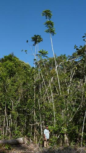 Atlantic forest, northeastern Bahia, Brazil | by Alex Popovkin, Bahia, Brazil