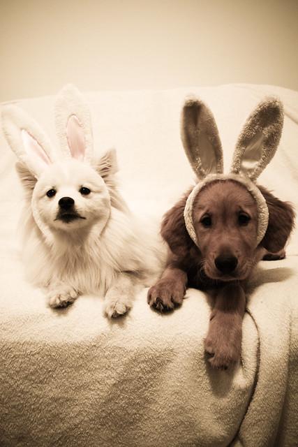 puppy bunnies