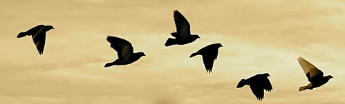 Follow the Leader | by DavidSpinks