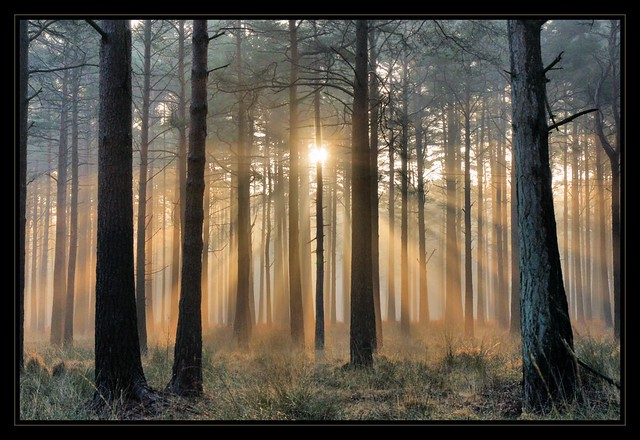 Rhinefield (New Forest) Sunrise