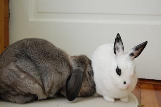 Rabbit Rabbit   by Justin Snow