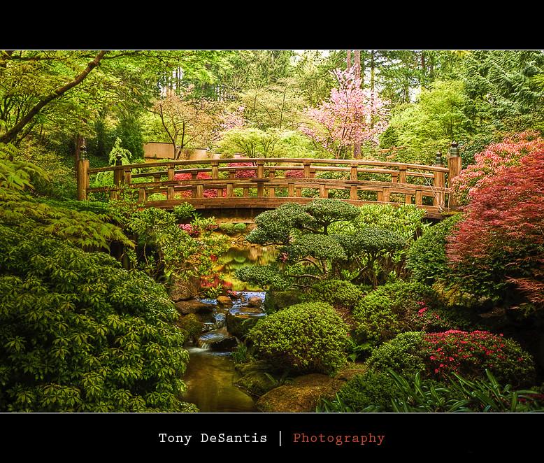 Day in the garden japanese garden in portland oregon is - Portland japanese garden free day ...