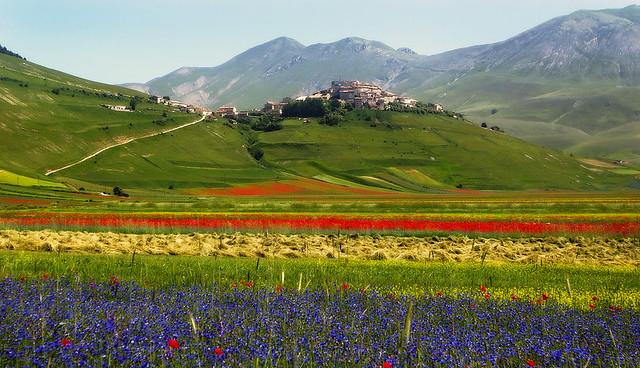 Castelluccio di Norcia (fioritura 2007)