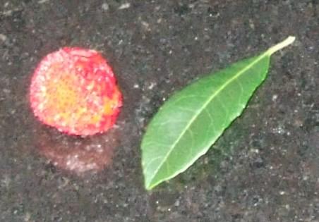 ParkLanefruit