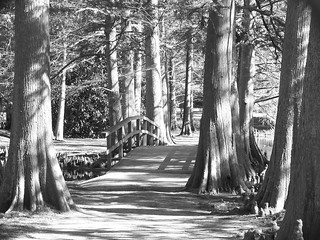 Swan Lake walkway in black and white.