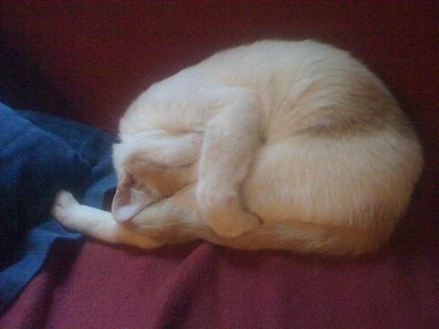 Kitty Yoga