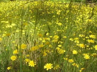 Primavera 2009 en Talca