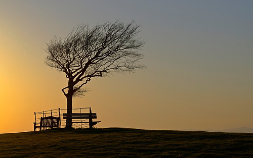 sunset tree wind gloucestershire bss cleeve nikond5000