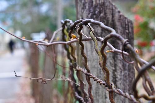 wood pink blue red brown green fence spring rust sidewalk fenceh sooc 105vr nikond90