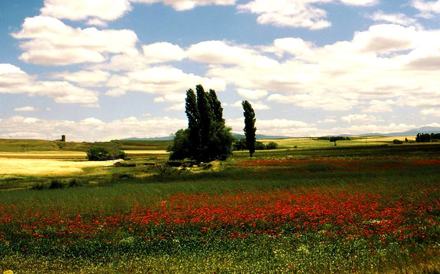 Spanien  - Mohnfeld und schöne Wolken   - 0301