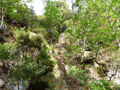 "Ruisseau de Peralzone : trace vers le""chemin"" en RD de la cascade du Peralzone"