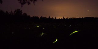 firefly | by qmnonic