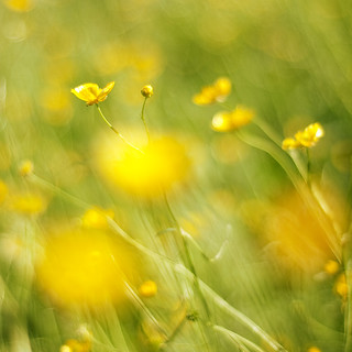 summertime...   by FotoChaotin