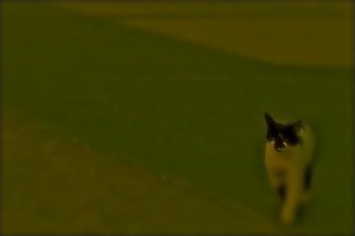 CAT____CAT____!!!!!!!GREEN......
