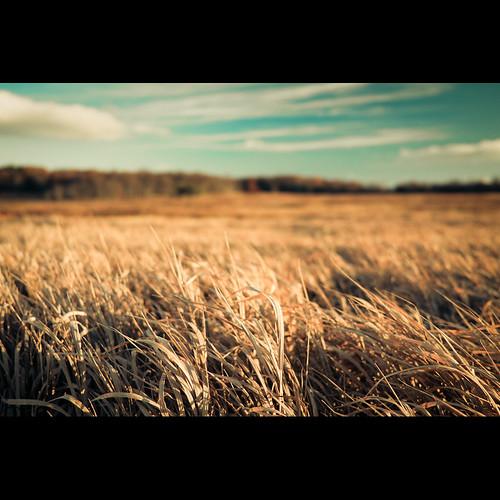 autumn sunset field grass virginia shenandoah bigmeadows whilemyguitargentlyweeps milepost51