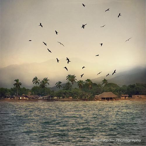 ocean sea birds landscape mexico village palmtrees pacificocean puertovallarta