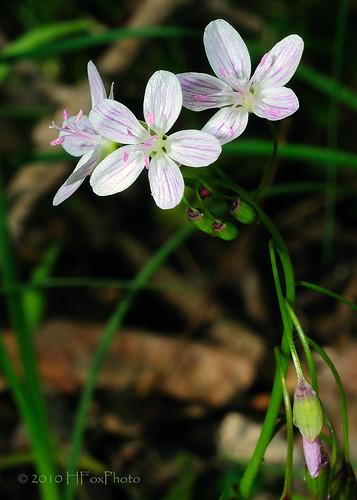 nature leaves spring woods wildflower mywinners