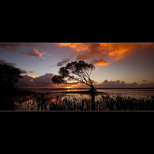 ocean trip morning travel light sea sky plants sun seascape color colour reflection tree nature water beauty clouds contrast sunrise canon landscape eos early photo interestingness dof angle tide wide sigma australia explore mangrove 7d queensland rays 1020mm photograhy waterscape 10mm exposue beachmere stupie